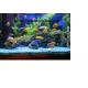 tout savoir sur les poissons d' eau douce tome (1)